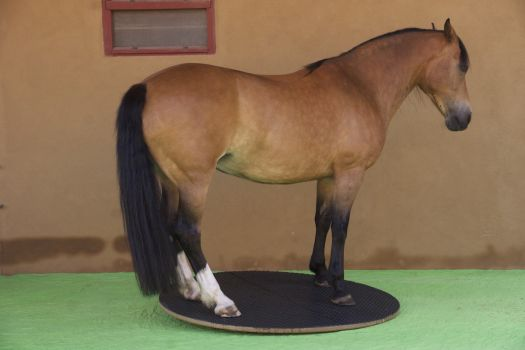 Steigerwald.T-1500R - muscle build up for your horse
