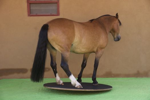 Steigerwald.T-1500R - muscle training for equines