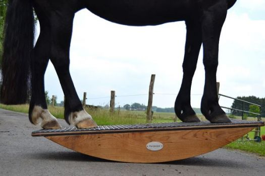 Steigerwald.Training & therapy equipments - whole-body horse rockers