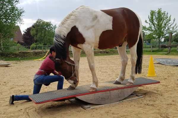 Training Specialist  for equines module 1