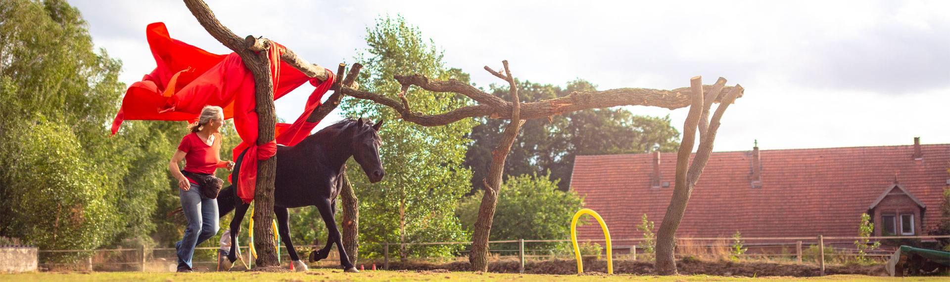 True Horse Agility mit Pferdetrainerin Nina Steigerwald