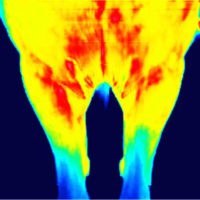 Thermografie ohne wippen