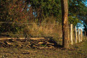 Zaun und Beginn einer Totholzhecke