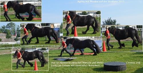 Horse Agility auf der Verdiana 2015
