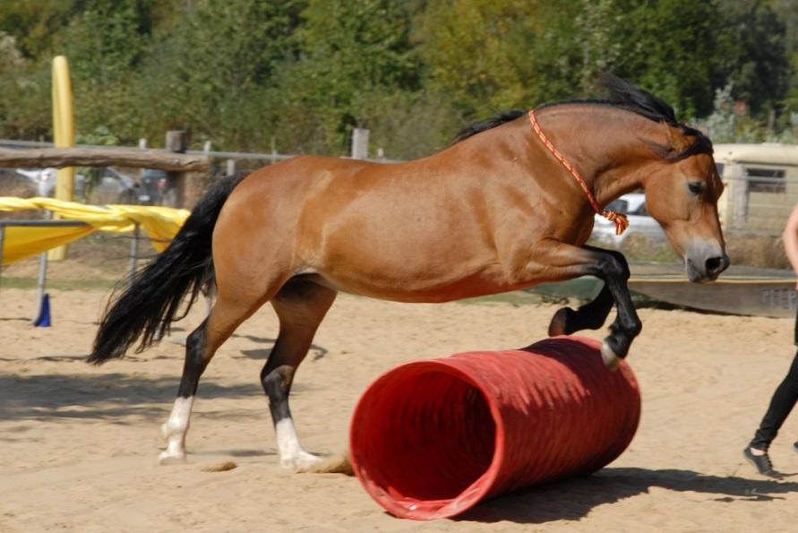 Freya jumping