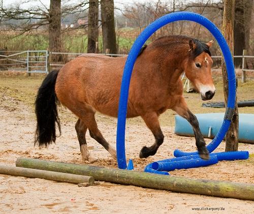 Freya im Horse Agility Parcours