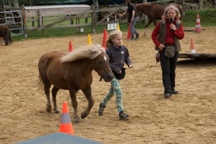 Horse Agility Parcours