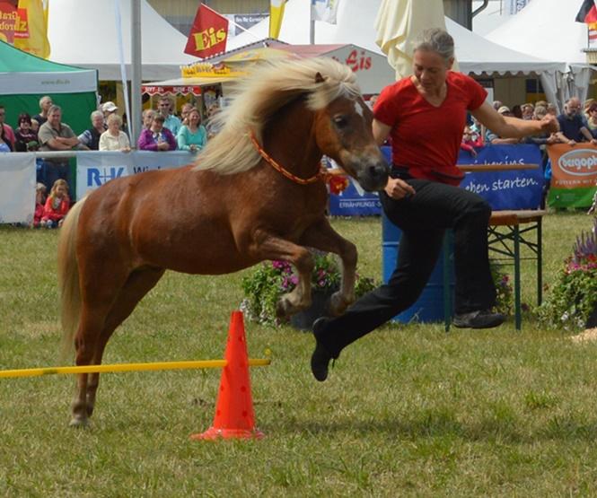 https://www.steigerwald-t.de/de/horseagility-verdiana-2015/
