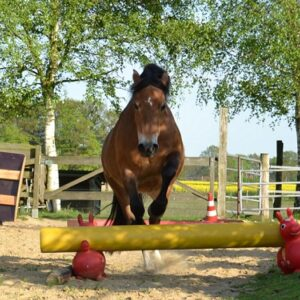 True Horse Agility jumping pony