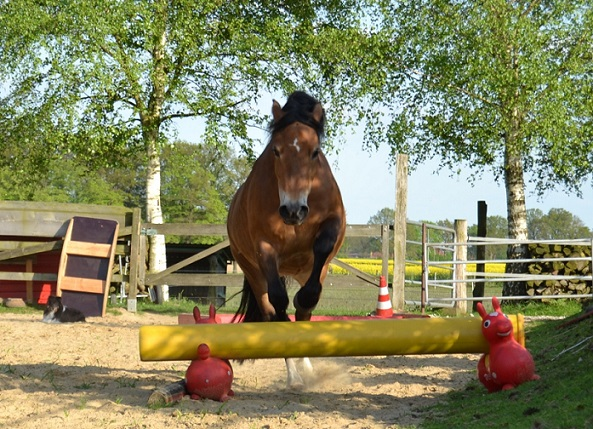 Freya im True Horse Agility Parcours