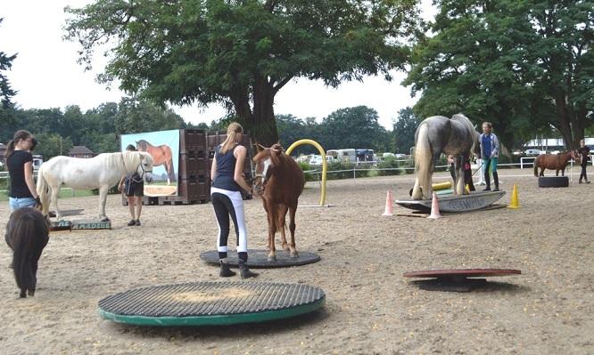 Horse Agility Turnier 2017