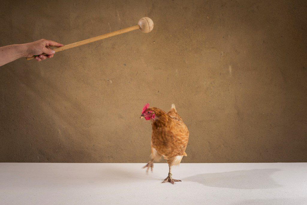 Hühnerseminar Modul 3