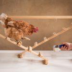 Chicken Camp module 4