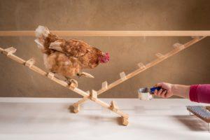 Hühnerseminar Modul 4