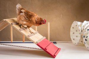 Hühnerseminar Modul 5