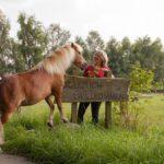 Intensivtage Pferdeclickern