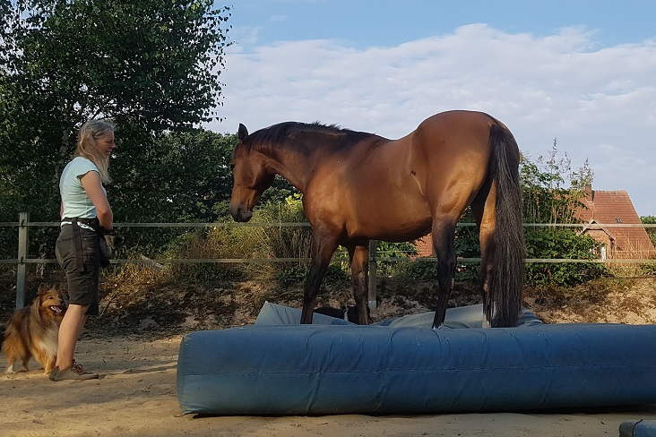 training horses with mats