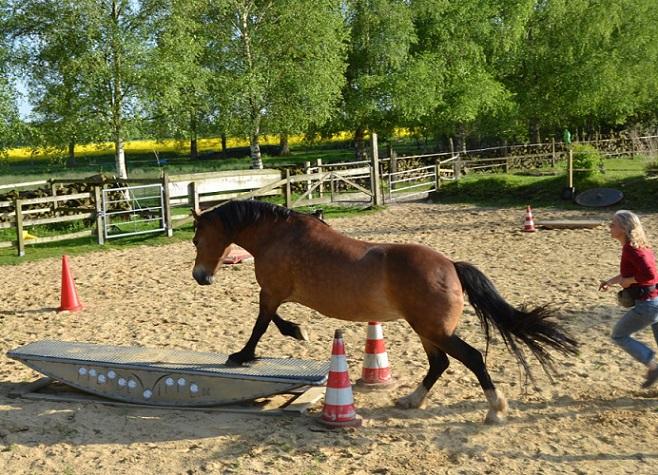 Freya und Nina auf dem Horse Agility Platz
