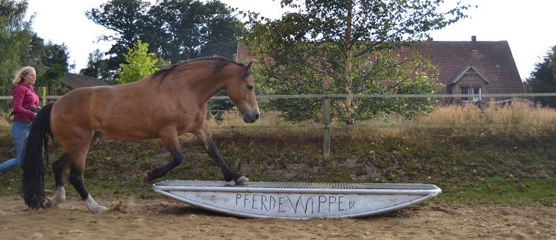 Pferdewippe Aufgang im Trab