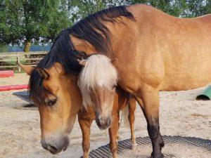 Trainingsspezialist Pferd Modul 8-10