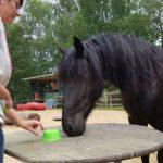 Trainingsspezialist Pferd Modul 5Trainingsspezialist Pferd Modul 5