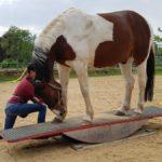 Trainingsspezialist Pferd Modul 1