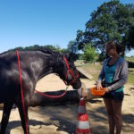 Training Specialist for equines module 4
