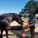 Trainingsspezialist Pferd Modul 4