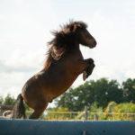 Trainingsspezialist Pferd Modul 3