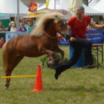 Trainingsspezialist Pferd Modul 6