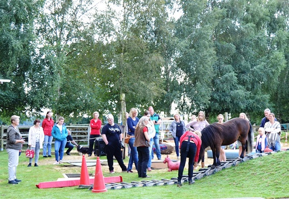 day of true horse agility
