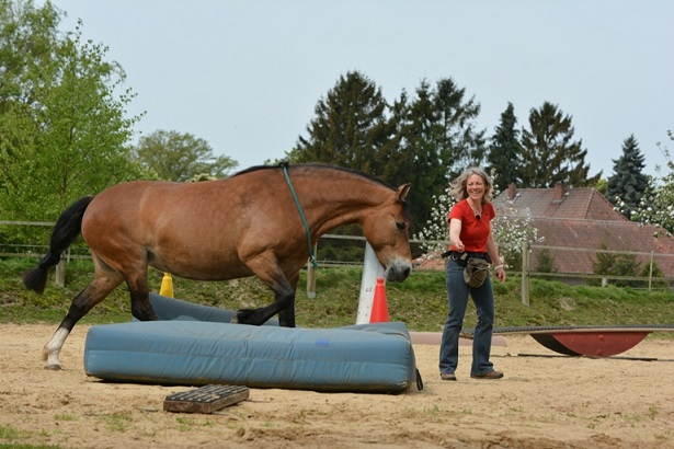 true horse agility with Freya