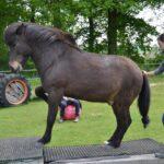 Trainingsspezialist Pferd Modul 7