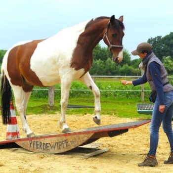 Pferdetrainerin Nadine Wachtmeister