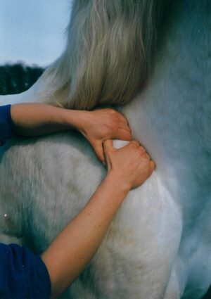 Nina Steigerwald - physiotherapy for horses