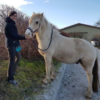 Pferde Clickerei - Dorina Beuch